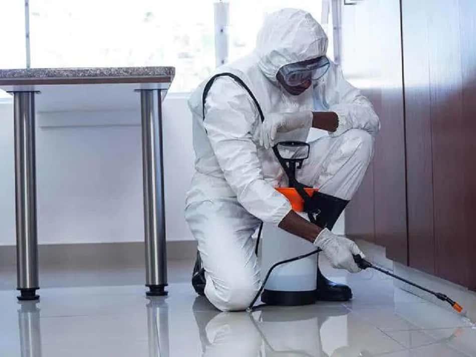 Termite and Pest Control Services in Bradenton?